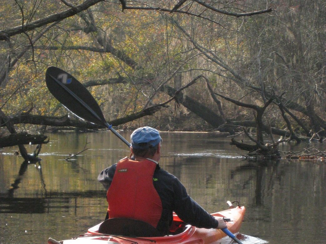 You just might spot a bald eagle or great blue heron while paddling at  Reed Bingham State Park.