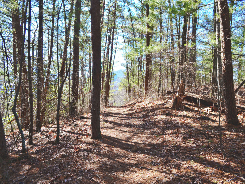 Whether the sun is shining through the trees or the foliage is covered in snow surrounding the slightly treaded path, it makes for a great day hike.