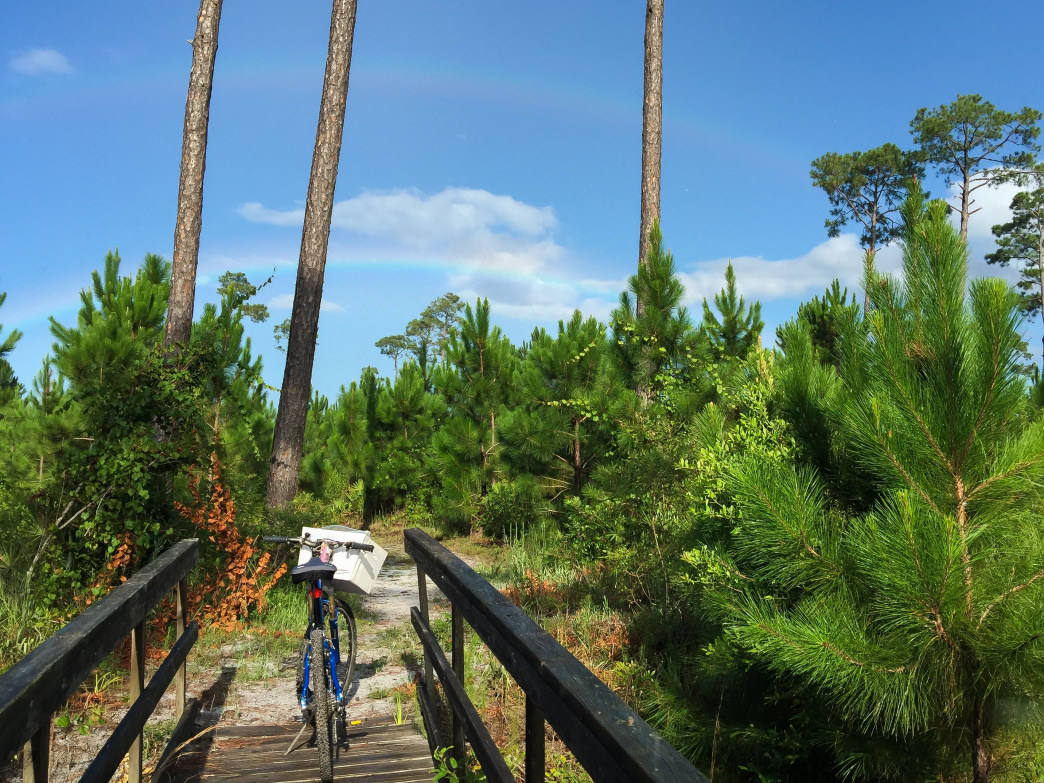 Gulf Shores and Orange Beach feature a wide variety of bike trails and paths to get around town and explore.