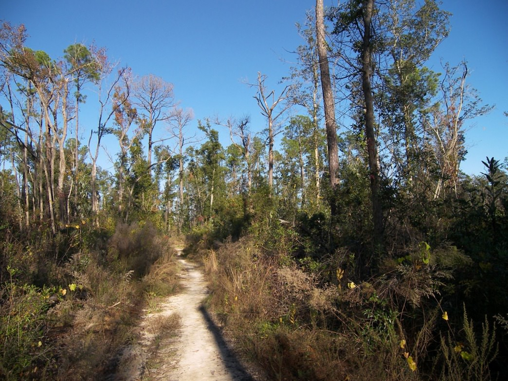 "UWF Bike Trails in ""Campus Woods"" Pensacola, Florida."