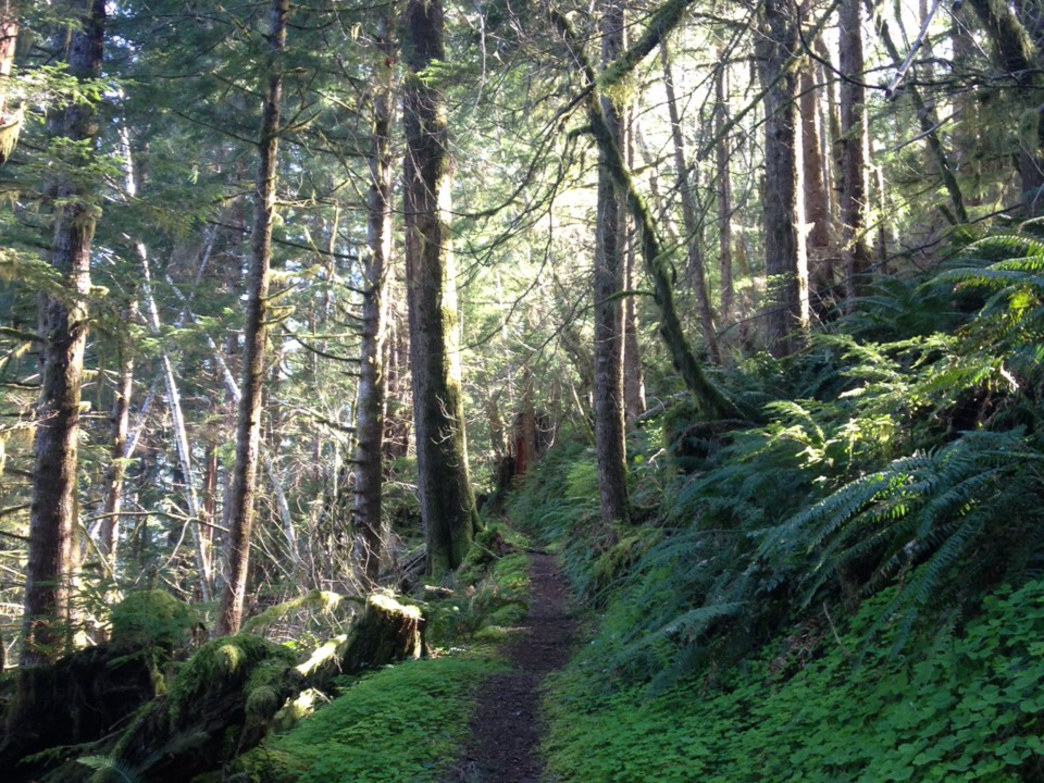 The smooth singletrack typical of Olympic National Park trails
