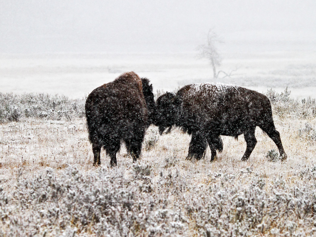 Seeing the Tetons covered in snow is one of the perks of a winter wildlife tour through the National Elk Refuge.