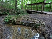 20170612_Tennessee_Chattanooga_Red Clay State Park_Hiking5