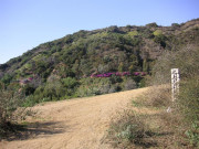 Image for Runyon Canyon Park - Trail Running