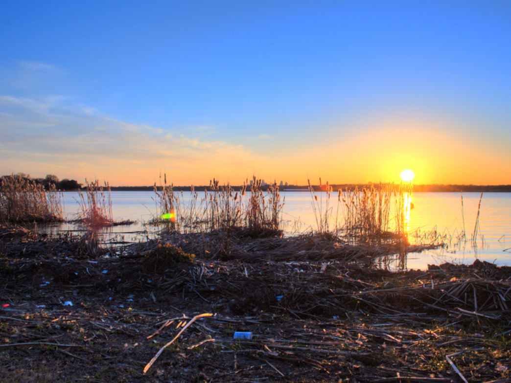 Trash caught in the reeds at White Rock Lake.