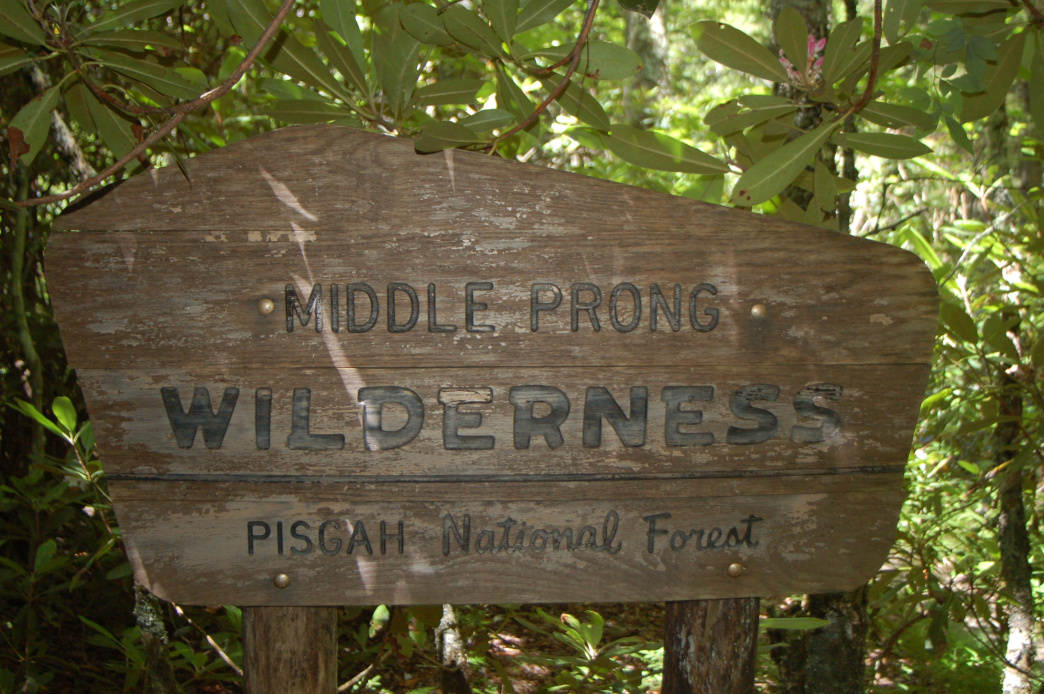 The Middle Prong Wilderness is one of the least visited parts of the Pisgah National Forest.