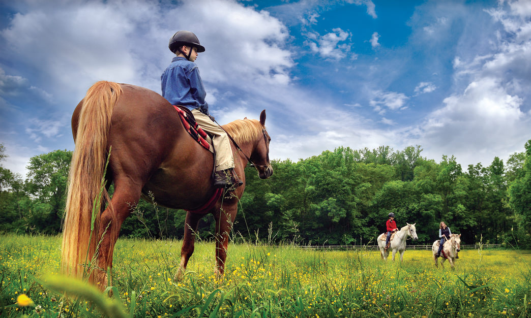 Enjoy the meadows and woodlands along the Yadkin River from horseback on miles of dedicated bridle trail in Tanglewood Park.