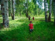 Kids hiking through aspens