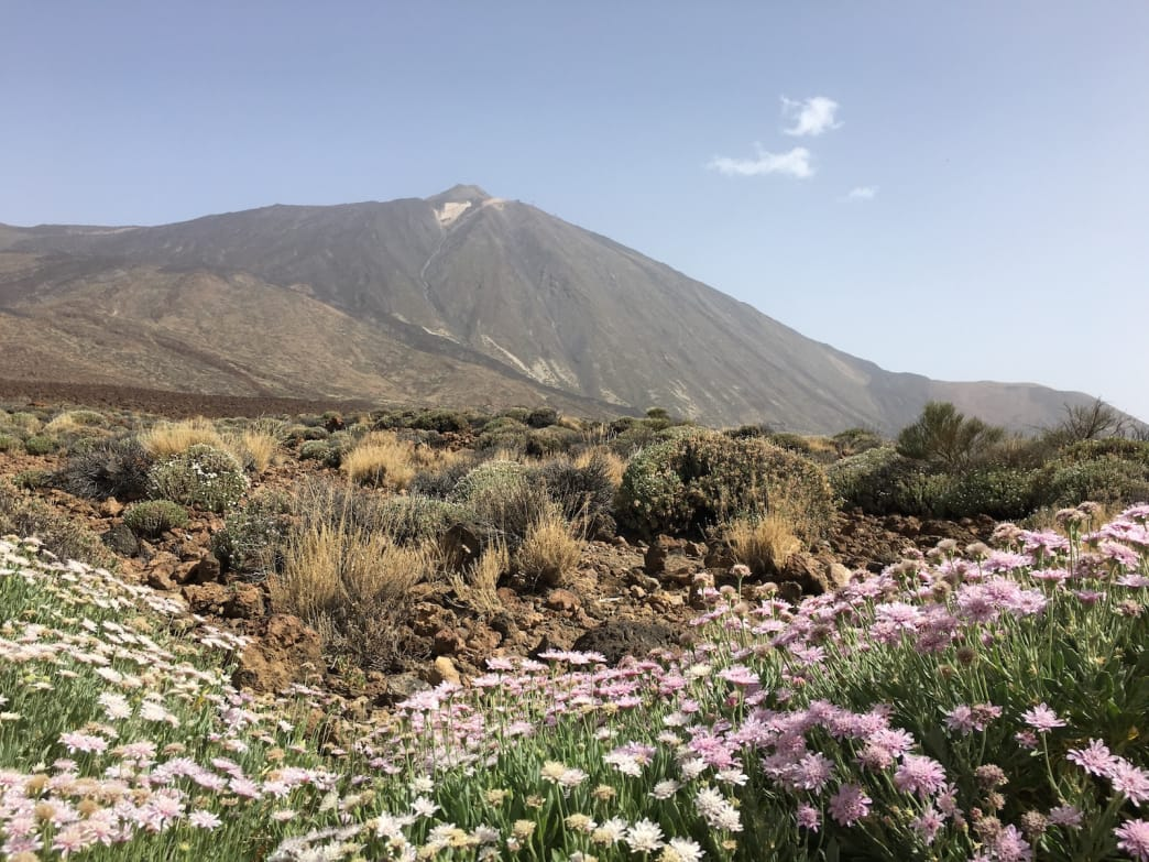 Spring is a wonderful time to catch flowers in bloom on Mount Teide, Spain's tallest peak, which rises to 12,198 feet on the island of Tenerife.