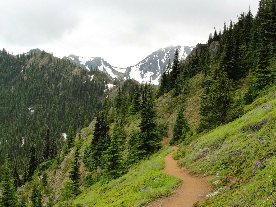 The Buckhorn Mountain Trail is arguably the best trail half marathon in Washington State.