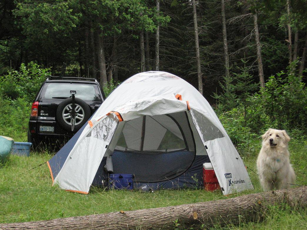 Car camp at one of these great spots for a Fido-friendly adventure.
