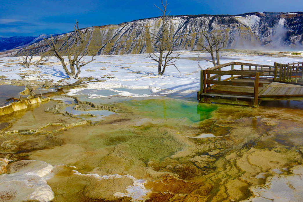 Mammoth Hot Springs in draped in snow.