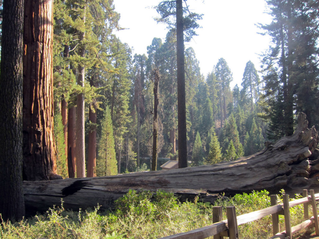 The impressive sequoias at Grant Grove.