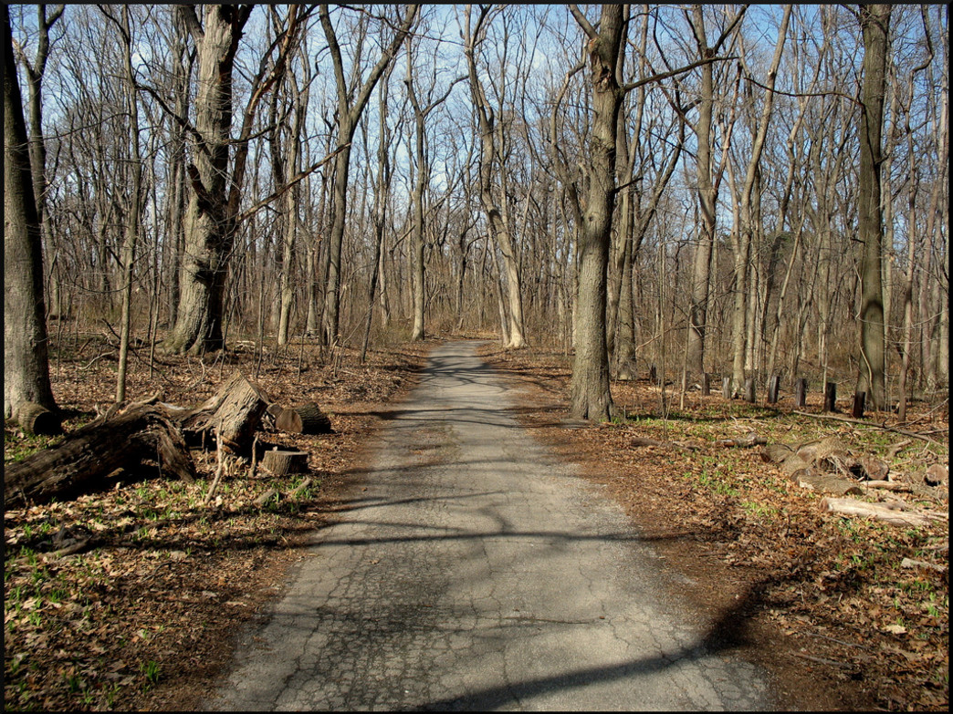 Pelham Bay woodlands in winter