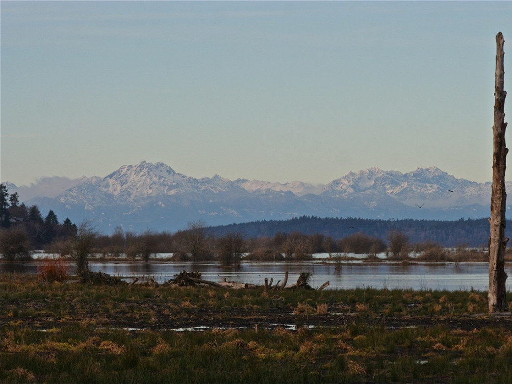 The Olympic Mountains as seen from the Nisqually Wildlife Refuge