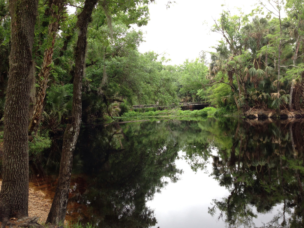 Blackwater creek flat water paddling for Fish camp lake eustis