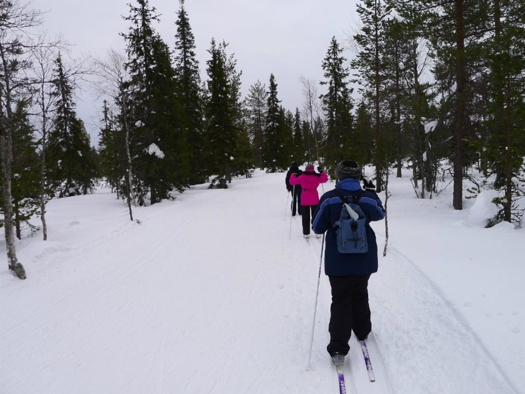 Jackson Hole is full of great trails for cross country skiing.