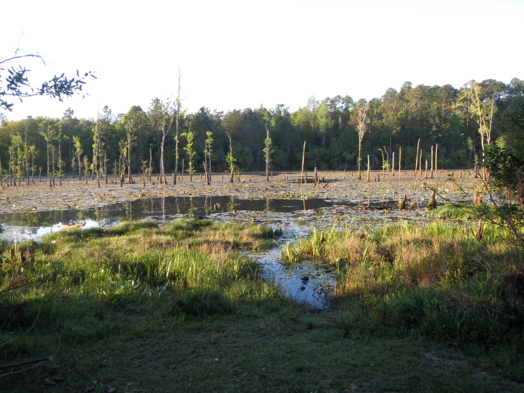 The sun peaks out over the trees onto a wetland at the University of South Alabama's Glen Sebastian Nature Trail