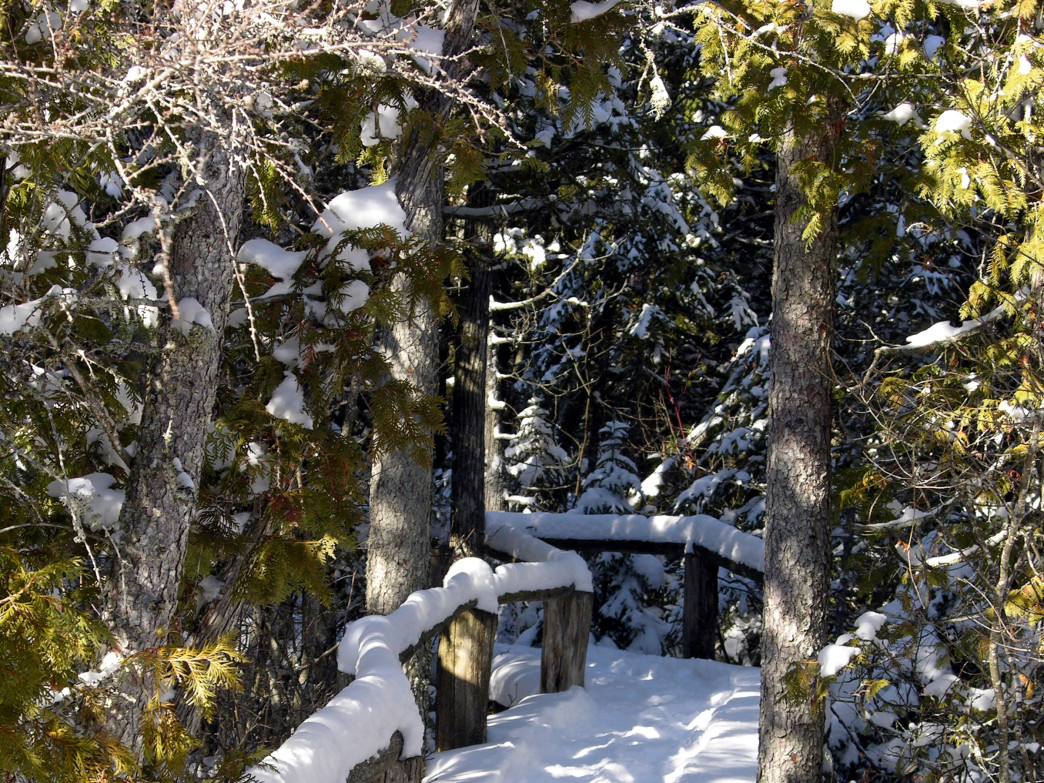 Ridges Sanctuary offers guided snowshoe hikes in the winter.