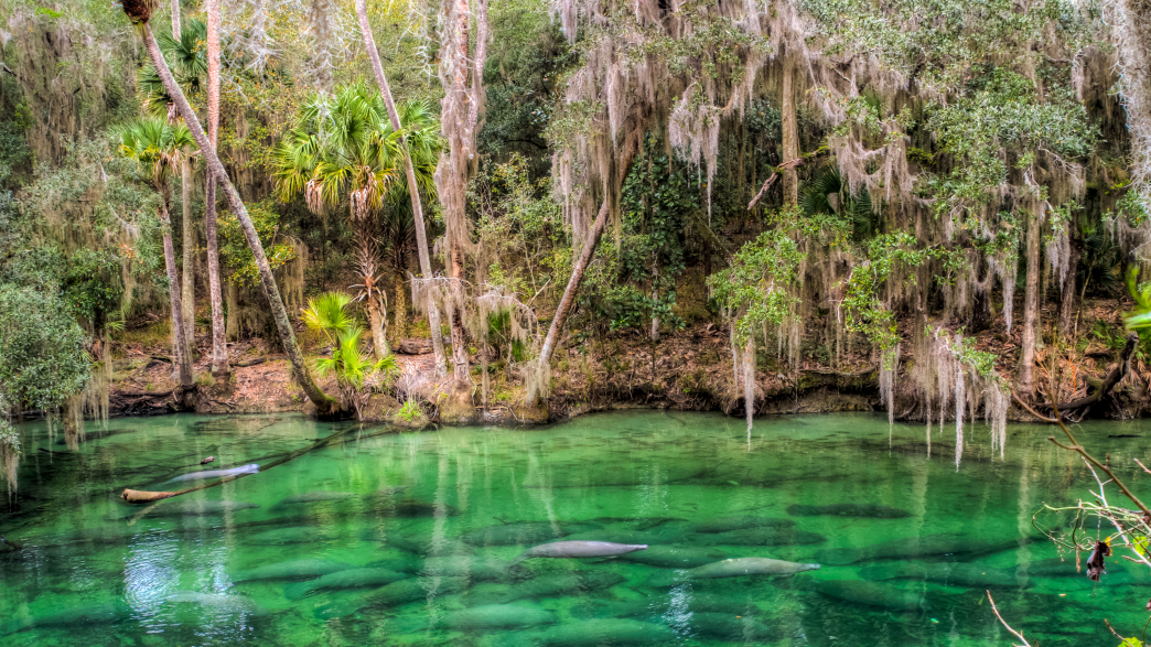 Backpacking And Camping Destinations Around Orlando Fl