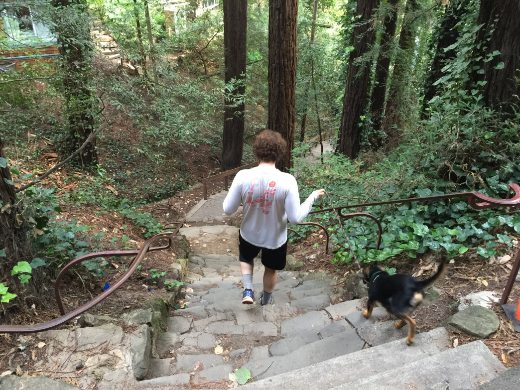 You can bring along Fido on this portion of the trail, 680 steps to the top