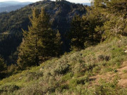 Image for Bogus Basin Loop