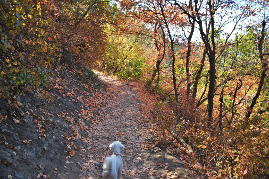 Bring your four-legged friends on this fun hike at Mueller Park.