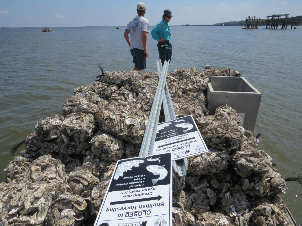 A SCORE barge loaded with the makings of an oyster reef
