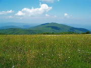 Image for Max Patch