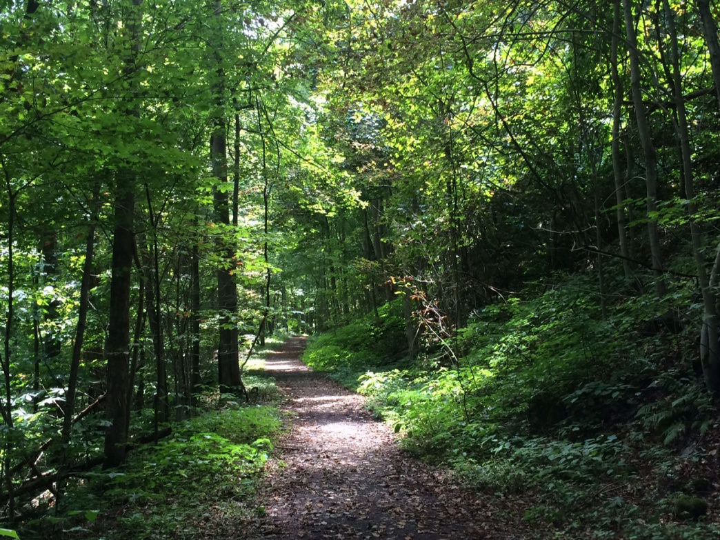 The densely forested and remote area of the Southside Junction Rail Trail near the Brooklyn terminus.