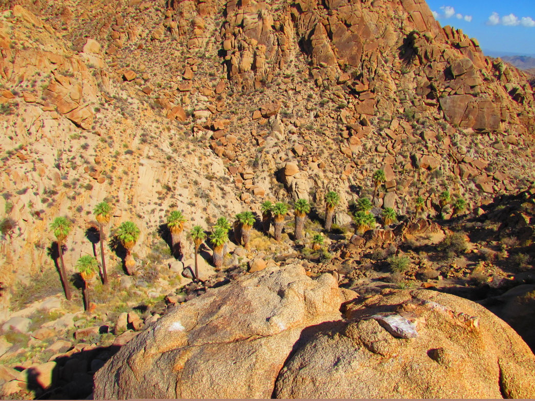 The Lost Palms Oasis is a great surprise for hikers, seeming to appear out of nowhere.      Allison Barnes