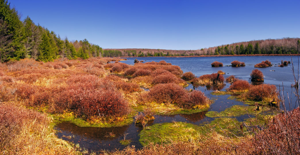 Black Moshannon Lake is surrounded by diverse marshes to explore.
