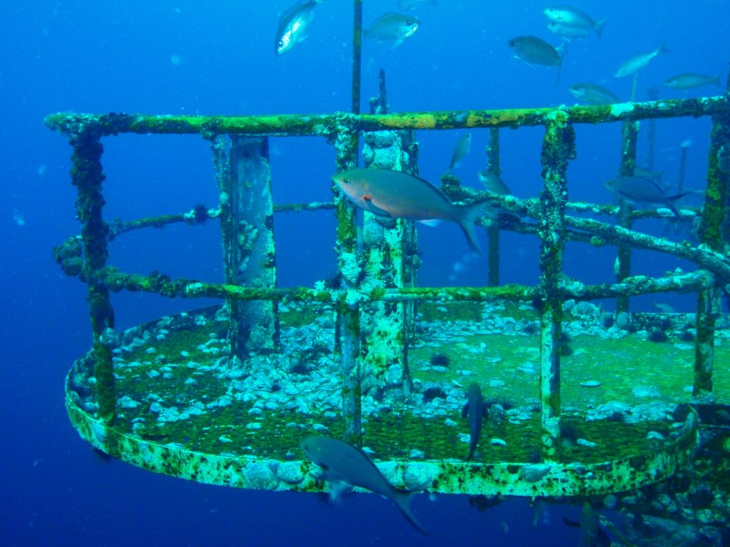 Diving at the sunken USS Oriskany, south of Pensacola, Florida.