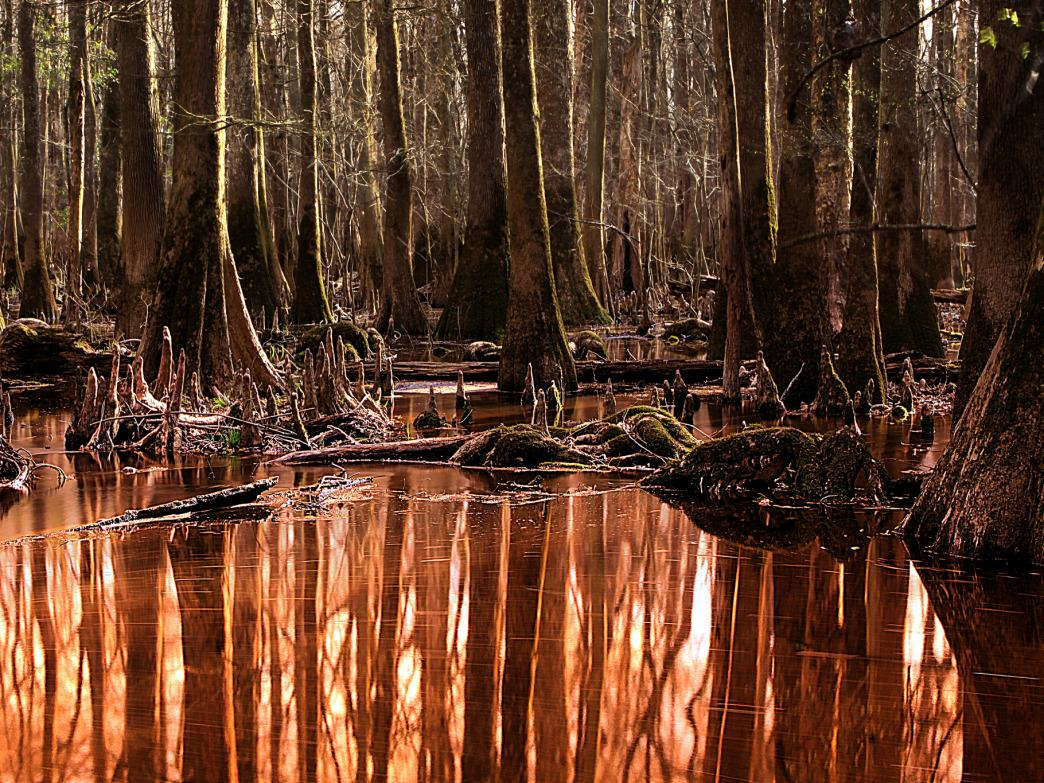 Congaree National Park.