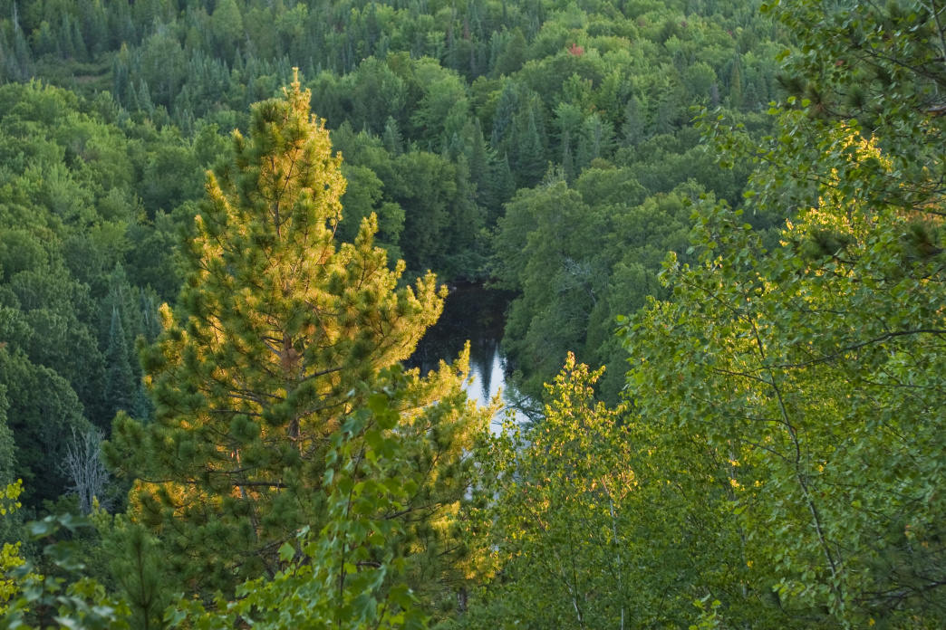 View of the gorge in Sturgeon River Gorge Wilderness, Michigan.