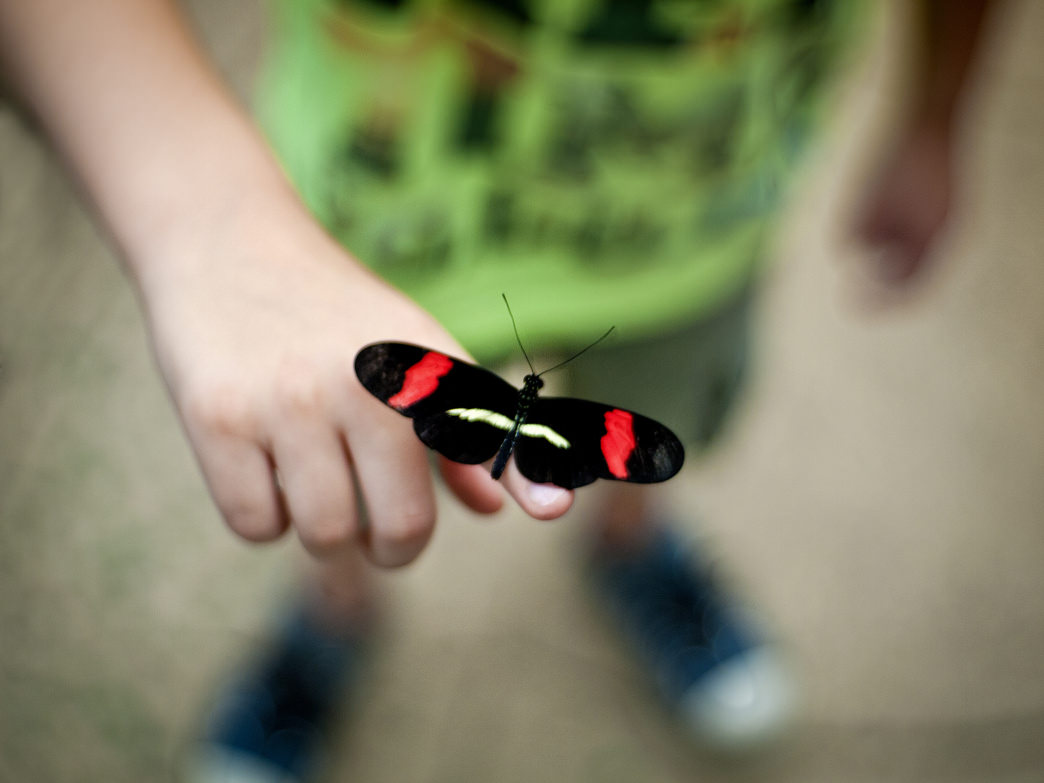 The Hop'n Blueberry Farm features a butterfly house that kids love.
