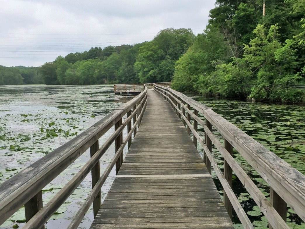 A gorgeous view of lily pad-filled water from this Teatown Lake Reservation bridge.