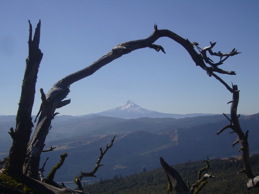 The hike along Coyote Wall offers impressive views of Mount Hood, across the Columbia River.