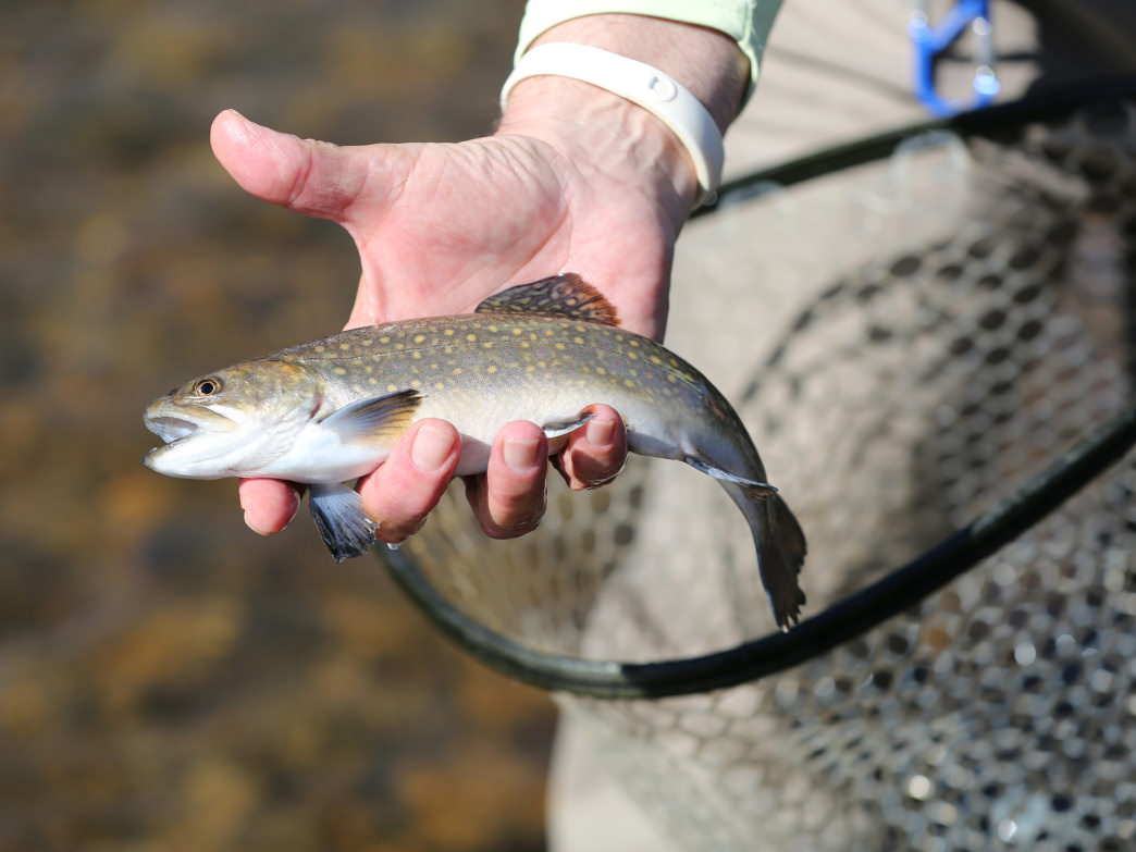 There is no better place to fly fish in North Carolina than Jackson County.