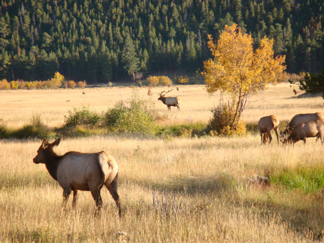What at first glance looks like elk just standing around soon reveals itself as the full fury of nature on center stage.