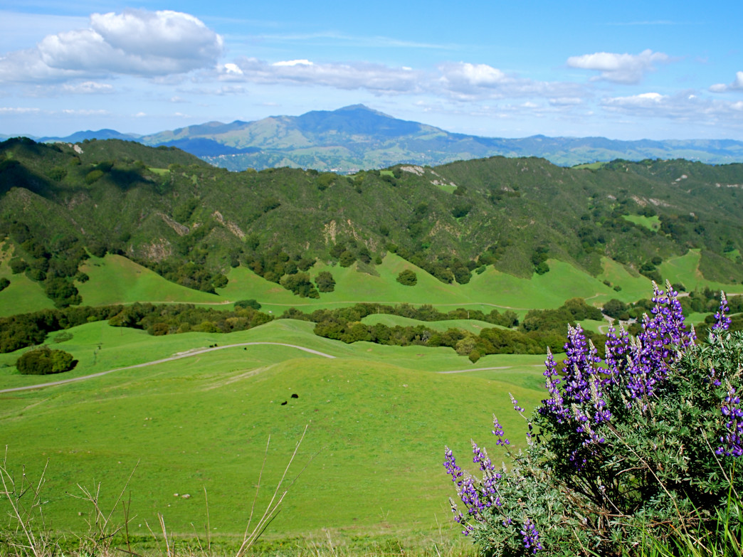 Mt. Diablo rises above the green hills of the East Bay.