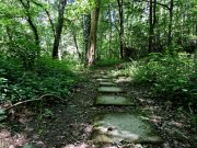 20170609_Tennessee_Chattanooga_Audubon Acres_Hiking9