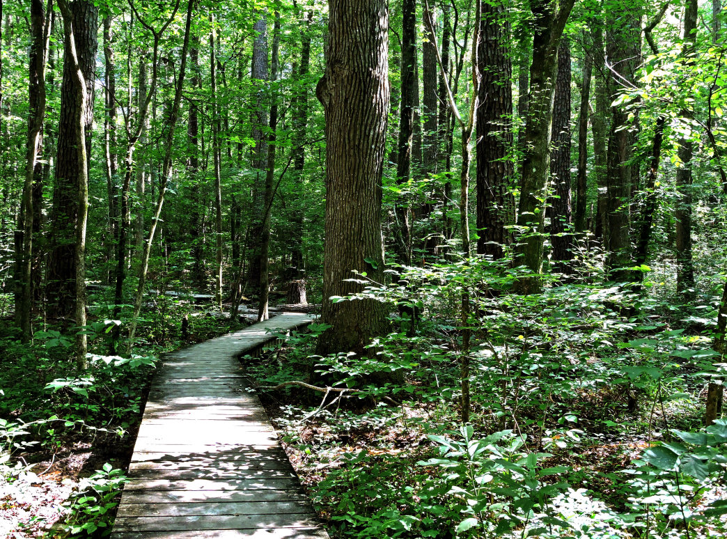 Red clay state park hiking kathryn crouch 20170612tennesseechattanoogared clay state parkhiking8 kathryn crouch 20170612tennesseechattanoogared publicscrutiny Image collections