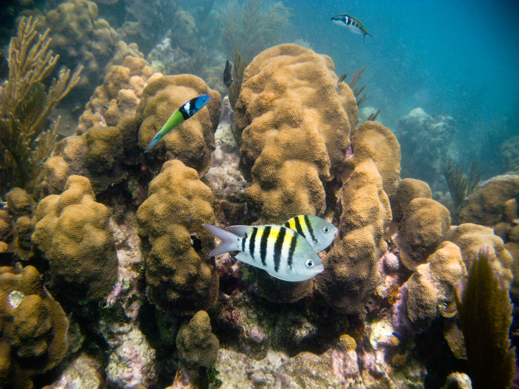 There is an abundance of tropical fish in the water around Dry Tortugas.