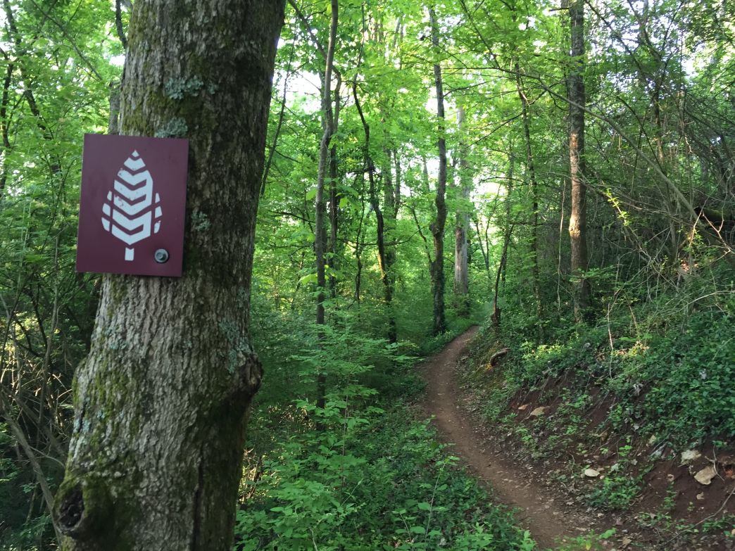 The smooth singletrack of Ijams Nature Center