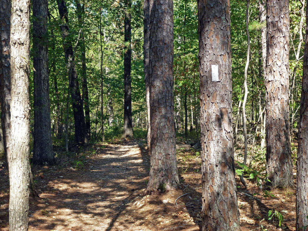 Hike in and spend the night backcountry camping on the Pigeon Roost Trail.