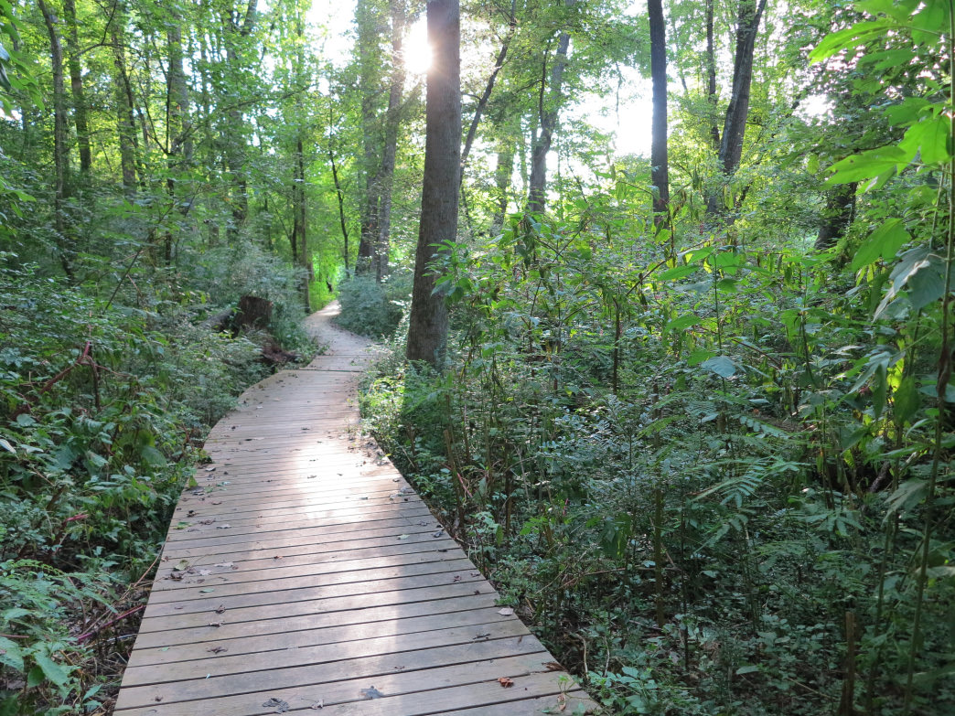 Morningside Nature Preserve is intensely green.