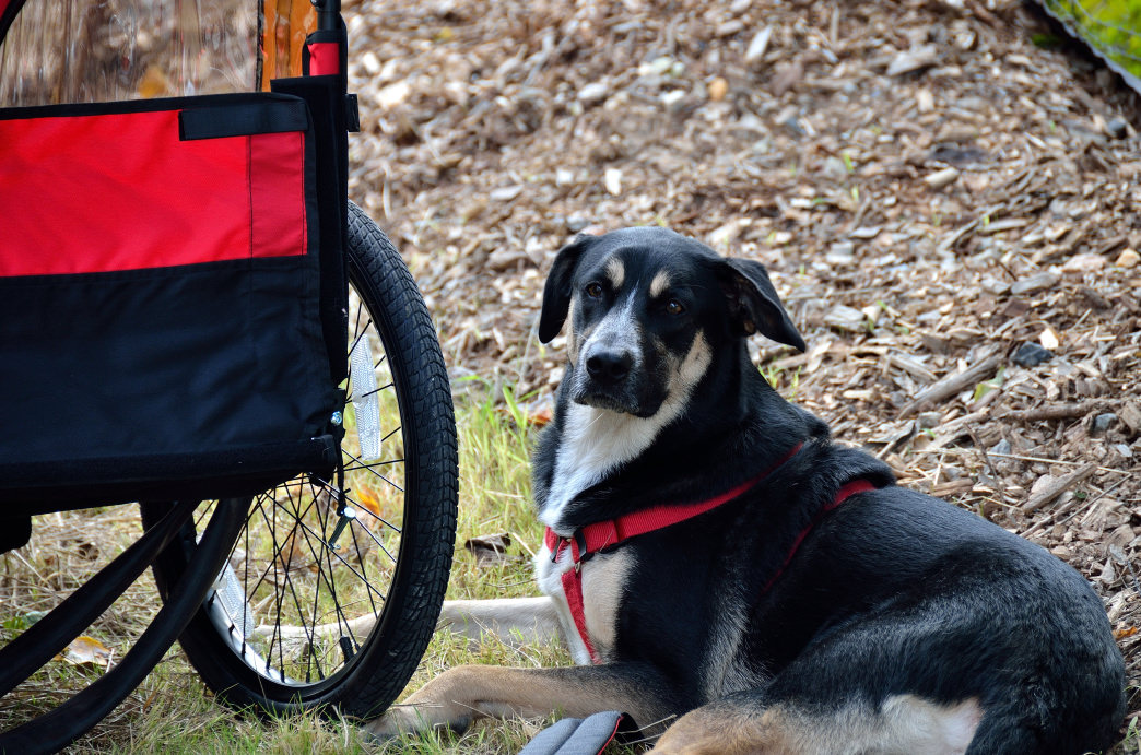 You'll find lots of canine companions in Piedmont Park.