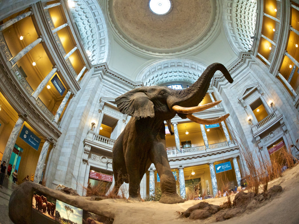 The Smithsonian Institution spans a vast network of museums and galleries, including the National Museum of Natural History.