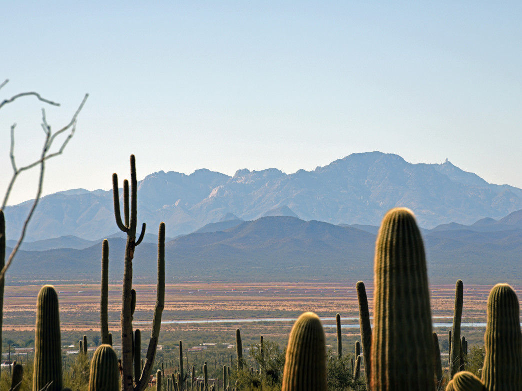 Saguaro cacti and mountains in Saguaro National Park.